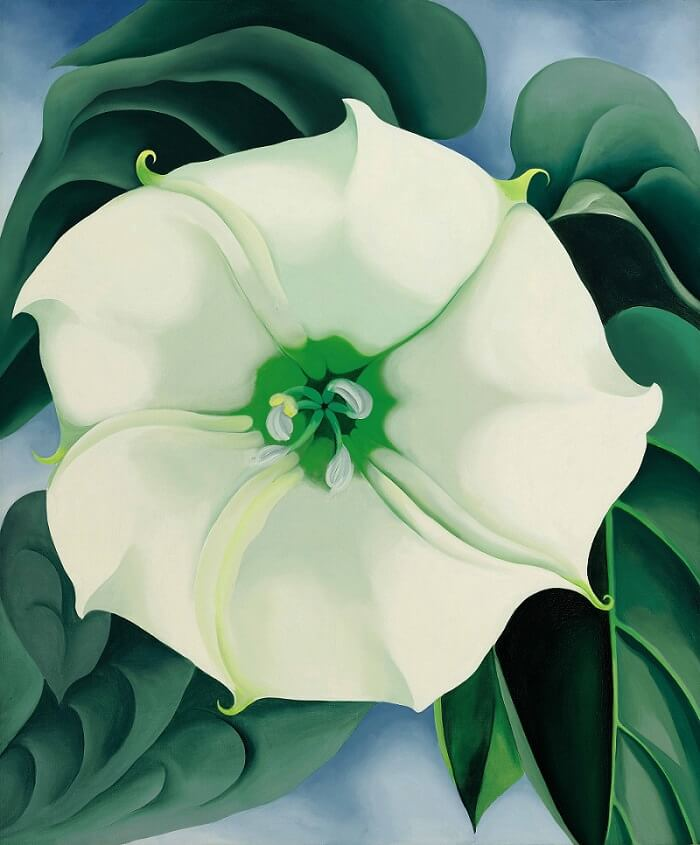 Jimson Weedwhite Flower No 1 1932 By Georgia Okeeffe