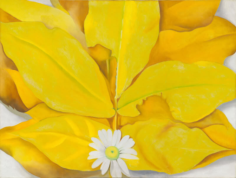 yellow hickory leaves with daisy 1928 by georgia okeeffe